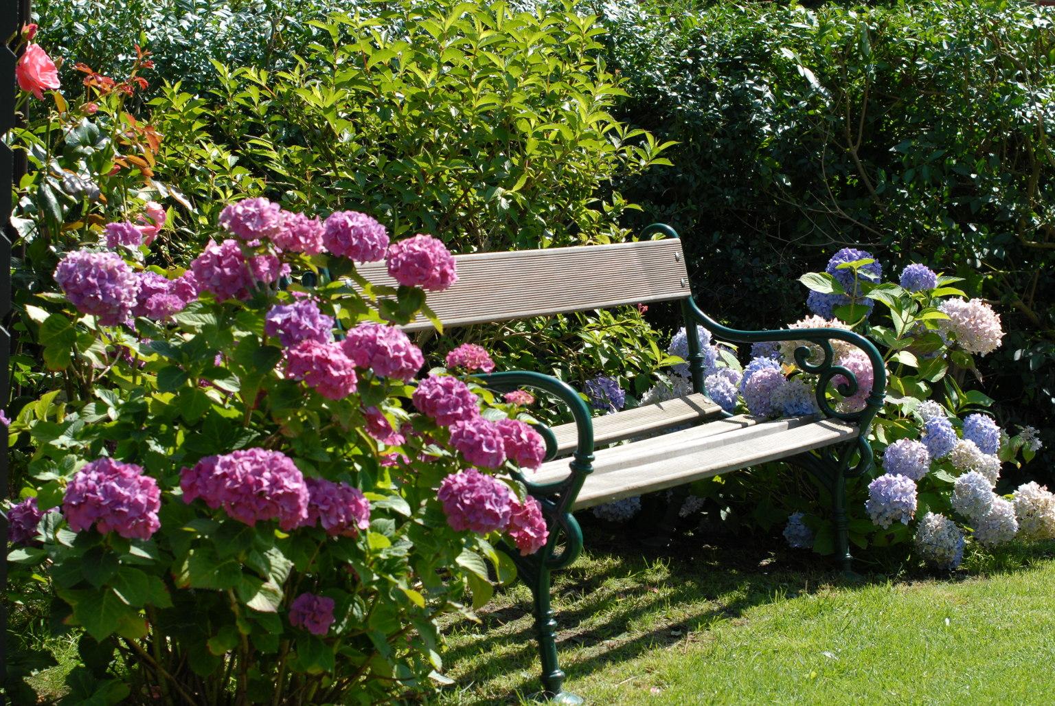 rosen im garten pflanzen wohndesign und m bel ideen. Black Bedroom Furniture Sets. Home Design Ideas